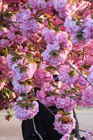 Paris, spring, Bagatelle, May in Paris