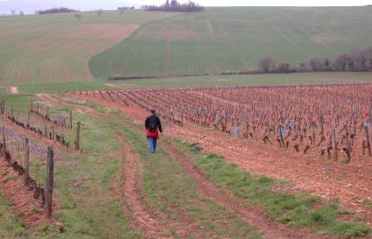 Vezelay, Burgundy vineyards
